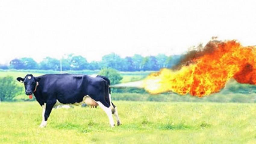 mucche-gas-691013